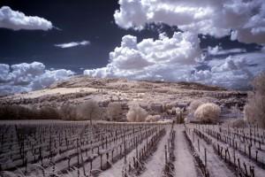 Dieselbe Aufnahme nach dem Farbkanaltausch: Blauer Himmel, blassweiße Natur.